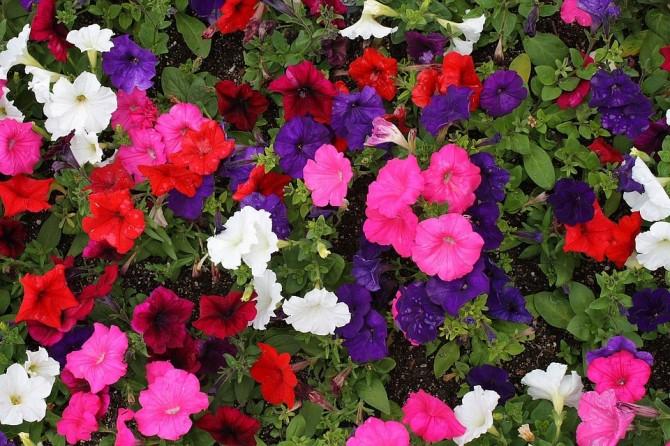 まで 咲く 春 から 花 秋 暑さに強く、ずっと花が咲き続ける夏のイチオシ一年草10種